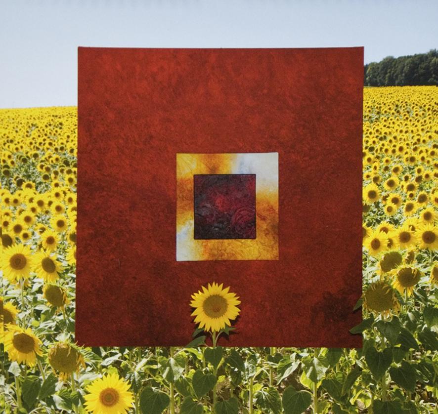 Sonnenblume 2014